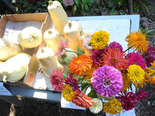 Butternut squash and zinnias on a table in the sun