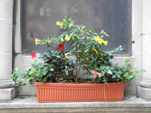 window box full of flowers in a church window