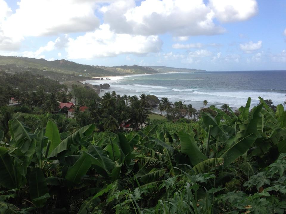 shoreline of Barbados