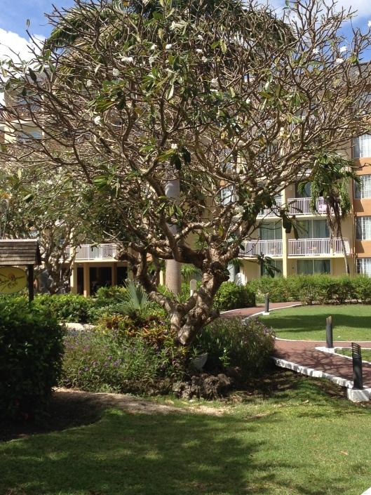 Tropical tree in bloom